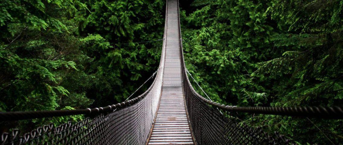 Bridge to a jungle
